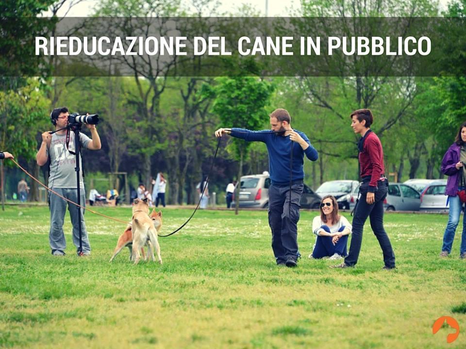 Rieducazione del cane in pubblico